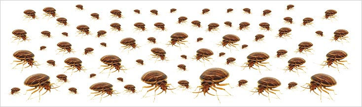 Bed Bug Holiday Illness Claims