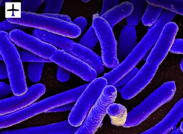 Claim for E.Coli contracted abroad