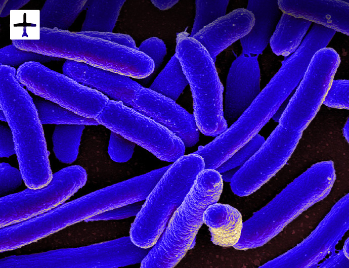 Get compensation if you suffered from E coli abroad